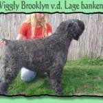 Wiggly Brooklyn v.d. Lage Banken